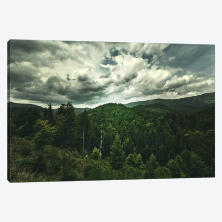 Cinematic Green Canvas Print #PSL41} by Philippe Sainte-Laudy Canvas Art