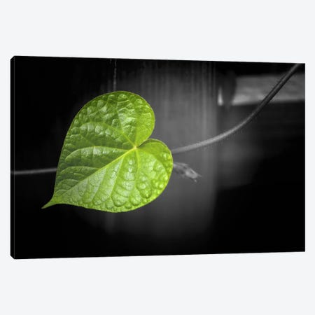 Coeur de Vert Canvas Print #PSL44} by Philippe Sainte-Laudy Art Print