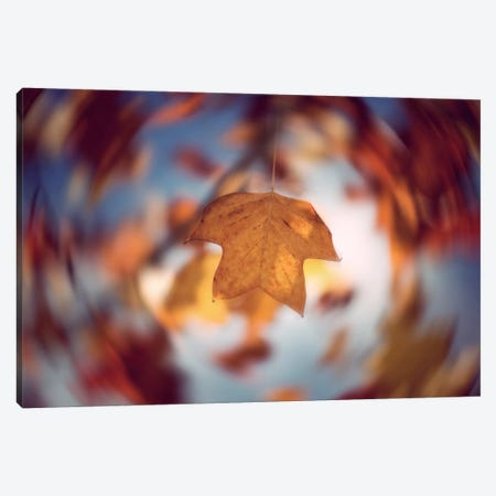 Complexity Canvas Print #PSL46} by Philippe Sainte-Laudy Canvas Art Print