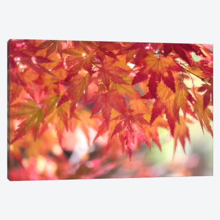 Curtain Of Autumn Leaves Canvas Print #PSL48} by Philippe Sainte-Laudy Canvas Wall Art