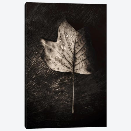 Dark Leaves Canvas Print #PSL50} by Philippe Sainte-Laudy Canvas Art Print