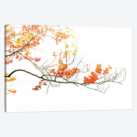 Delicate Autumn Canvas Print #PSL52} by Philippe Sainte-Laudy Canvas Print