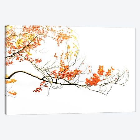 Delicate Autumn Canvas Print #PSL52} by Philippe Sainte-Laudy Canvas Print