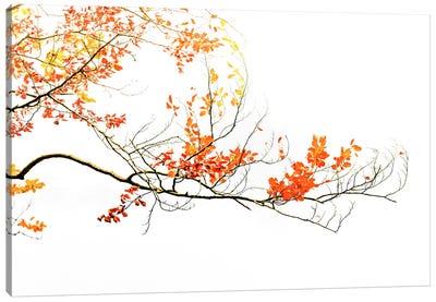 Delicate Autumn Canvas Art Print