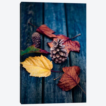 Deposited By The Wind Canvas Print #PSL53} by Philippe Sainte-Laudy Canvas Art Print