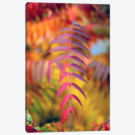 DOF And Leaves Canvas Print #PSL54} by Philippe Sainte-Laudy Canvas Artwork