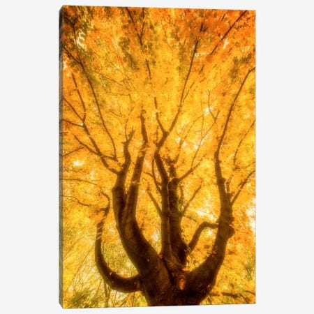 Fall Flames Canvas Print #PSL60} by Philippe Sainte-Laudy Canvas Wall Art