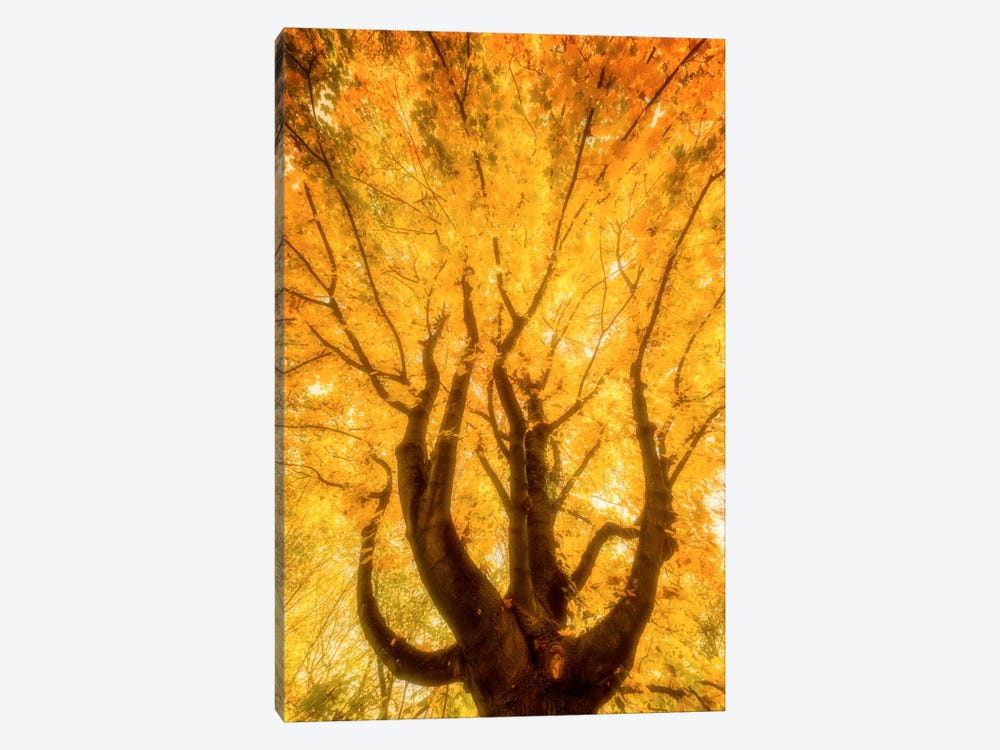 Fall Flames by Philippe Sainte-Laudy 1-piece Canvas Artwork