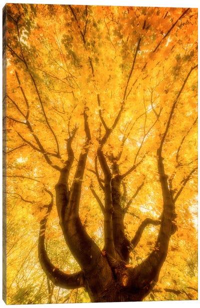 Fall Flames Canvas Art Print