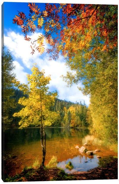 Fall Framing Canvas Art Print