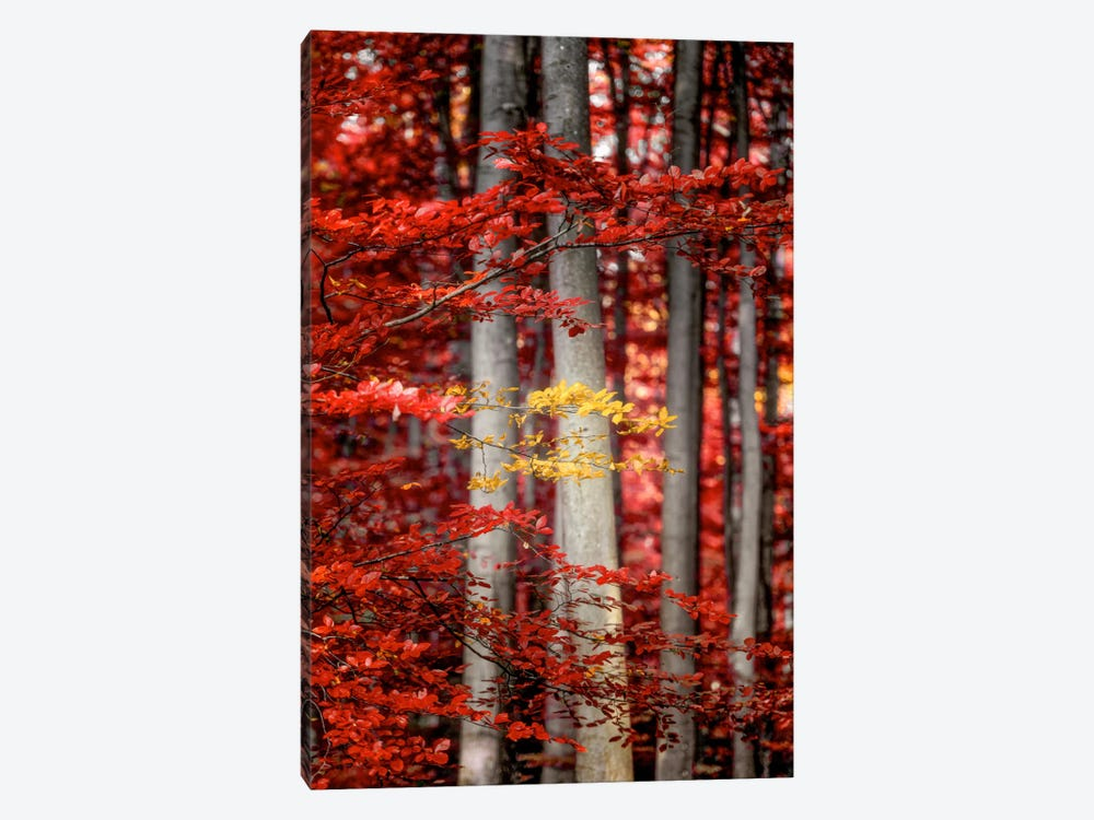 Final Moments by Philippe Sainte-Laudy 1-piece Canvas Art Print