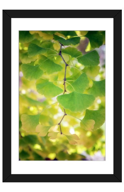 Fossil Leaves Framed Art Print