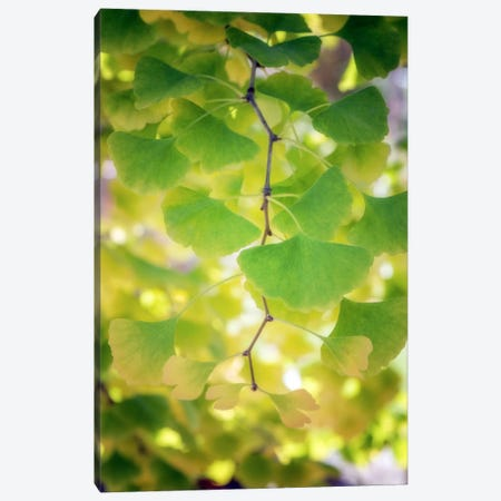 Fossil Leaves Canvas Print #PSL68} by Philippe Sainte-Laudy Canvas Artwork