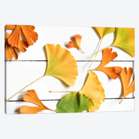 Ginkgo Colors Canvas Print #PSL70} by Philippe Sainte-Laudy Canvas Art Print