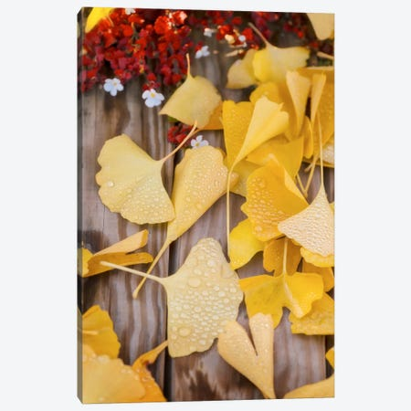 Ginkgo Featured Canvas Print #PSL71} by Philippe Sainte-Laudy Canvas Art Print