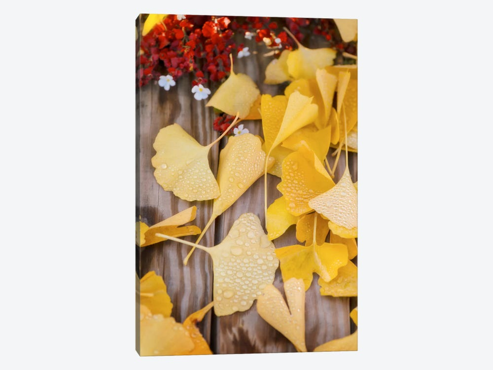 Ginkgo Featured by Philippe Sainte-Laudy 1-piece Canvas Artwork