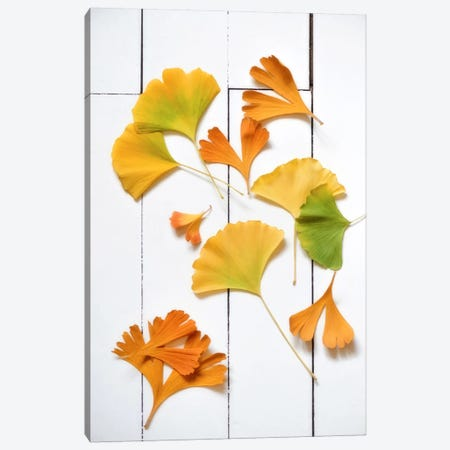Ginkgo Fun Canvas Print #PSL72} by Philippe Sainte-Laudy Canvas Print