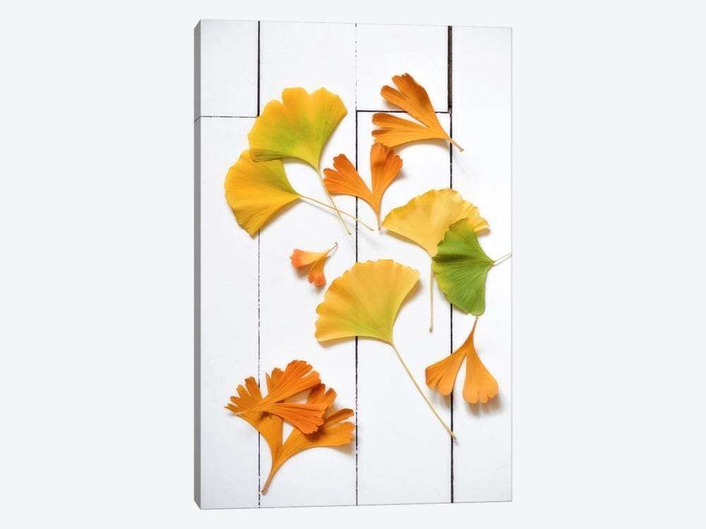 Ginkgo Fun by Philippe Sainte-Laudy 1-piece Art Print