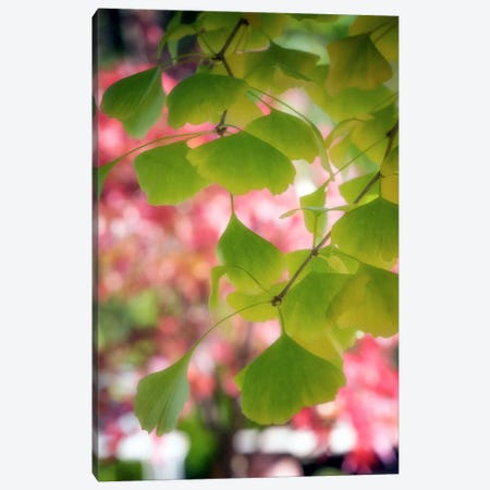 Ginkgo Mosaic Canvas Print #PSL74} by Philippe Sainte-Laudy Canvas Art
