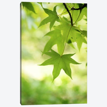 Green Closer Canvas Print #PSL79} by Philippe Sainte-Laudy Canvas Print