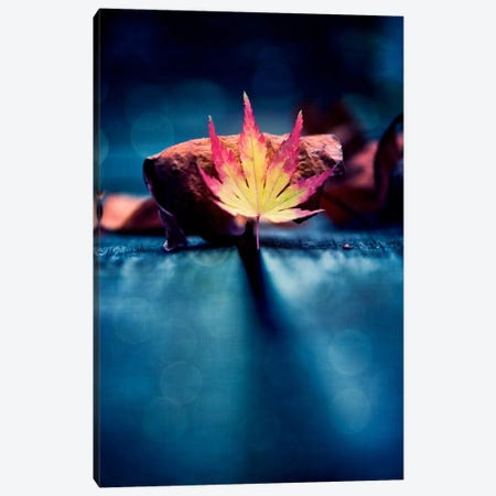 A Story Of Leaves Canvas Print #PSL7} by Philippe Sainte-Laudy Canvas Wall Art
