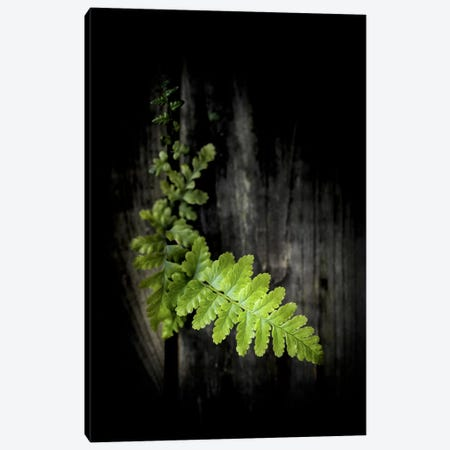 Green Power Canvas Print #PSL80} by Philippe Sainte-Laudy Canvas Artwork