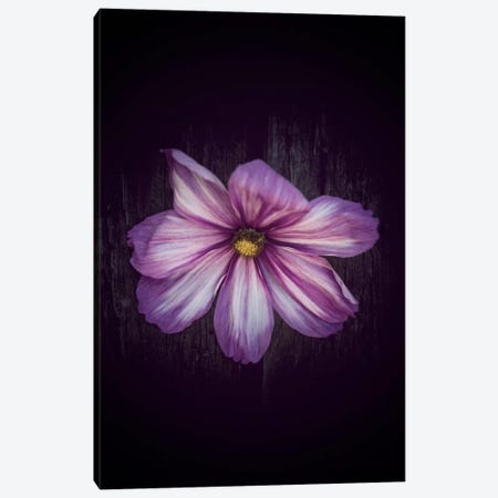 Humbly Yours Canvas Print #PSL84} by Philippe Sainte-Laudy Canvas Print