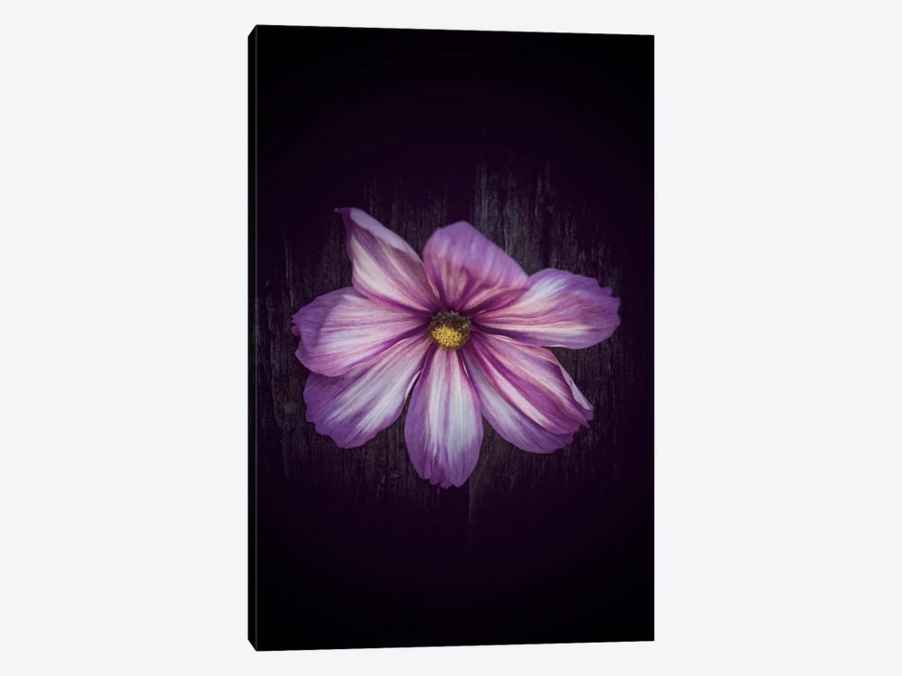 Humbly Yours by Philippe Sainte-Laudy 1-piece Canvas Art