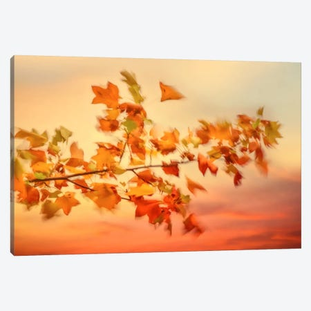 In The Evening Wind Canvas Print #PSL89} by Philippe Sainte-Laudy Canvas Art