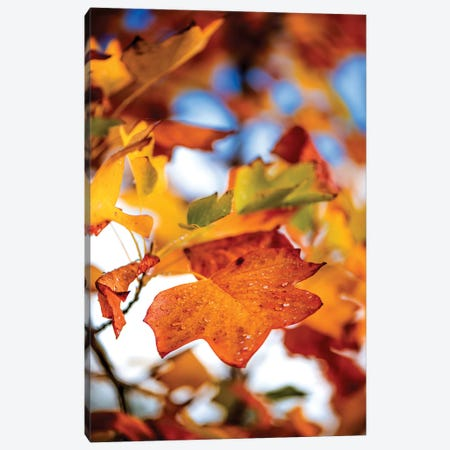Leaves Of Tulipier Canvas Print #PSL96} by Philippe Sainte-Laudy Canvas Artwork