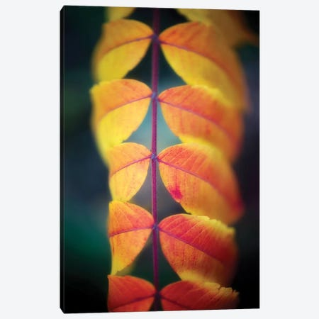 Leaves On The Line Canvas Print #PSL97} by Philippe Sainte-Laudy Canvas Wall Art