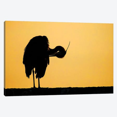 Grey Heron Sunrise Canvas Print #PSM13} by Pascal De Munck Canvas Artwork