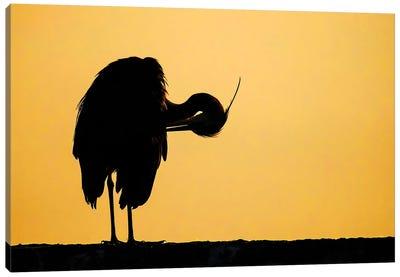 Grey Heron Sunrise Canvas Art Print