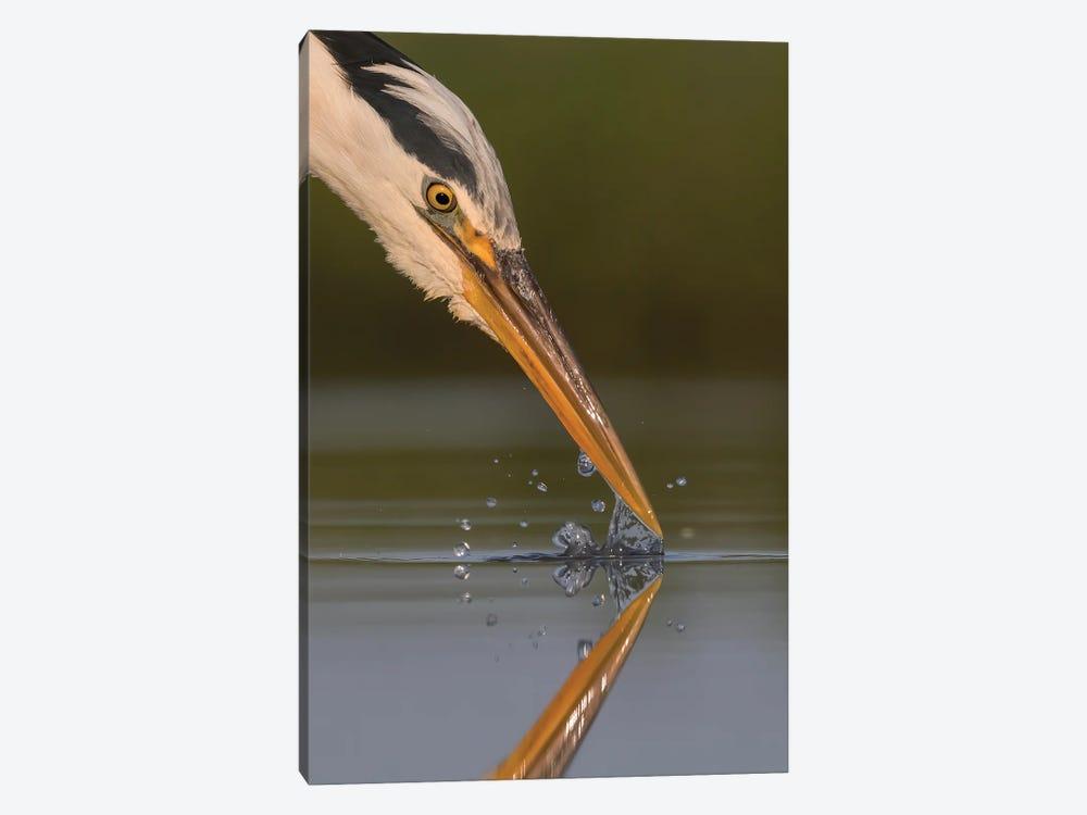 Grey Heron Splash by Pascal De Munck 1-piece Canvas Wall Art