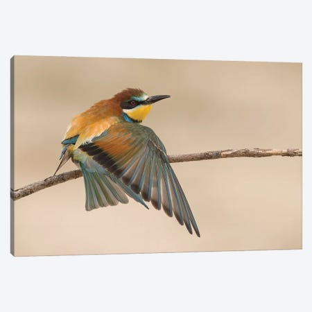Beeeater Stretching 3-Piece Canvas #PSM3} by Pascal De Munck Canvas Artwork
