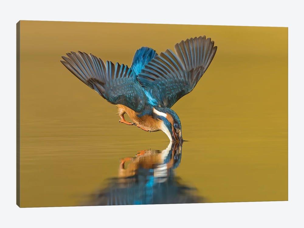 Kingfisher The Dive by Pascal De Munck 1-piece Canvas Print