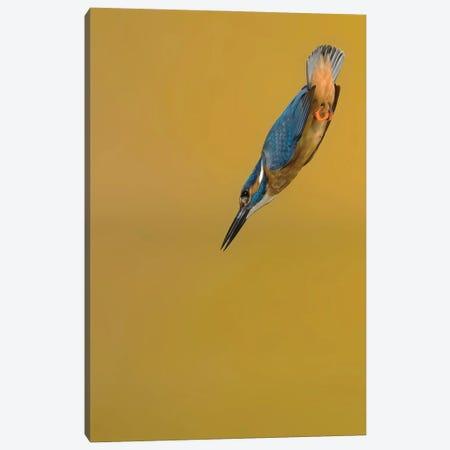 Kingfisher Arrow Canvas Print #PSM41} by Pascal De Munck Canvas Art Print