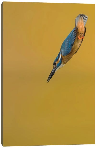Kingfisher Arrow Canvas Art Print