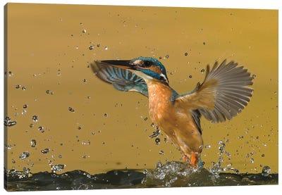 Kingfisher Splash Canvas Art Print
