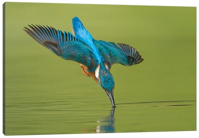 Kingfisher Near Touch Canvas Art Print