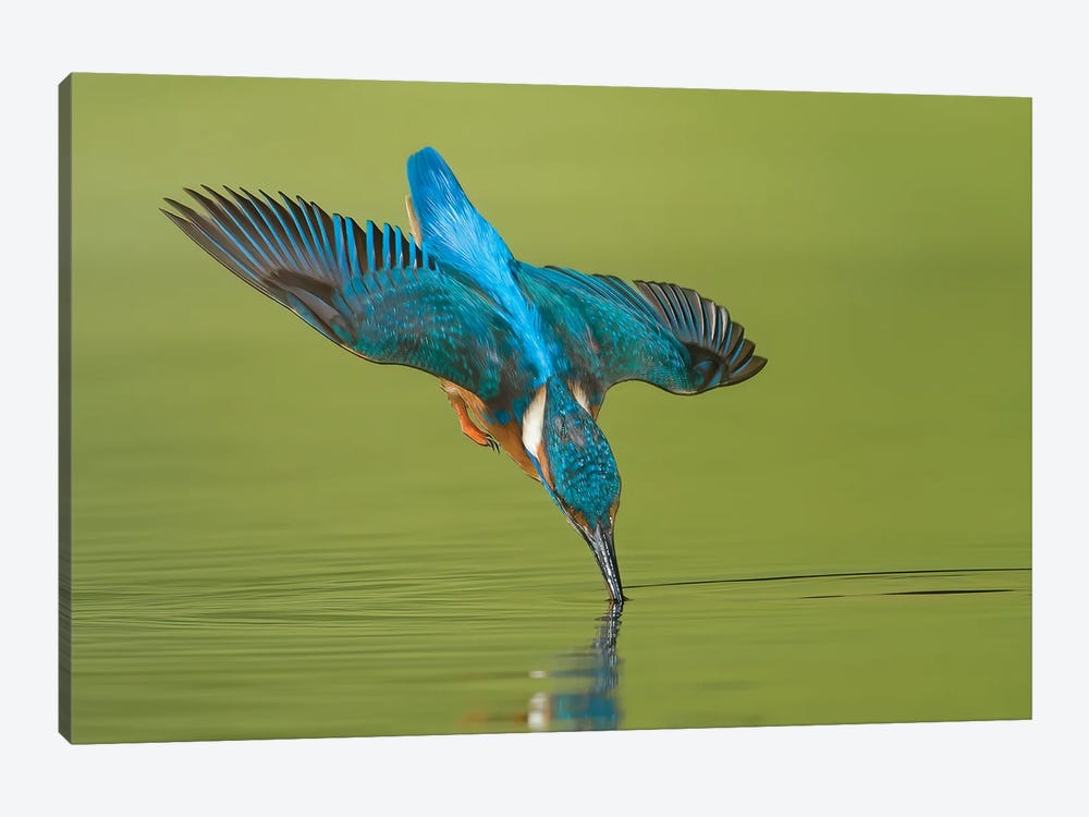 Kingfisher Near Touch by Pascal De Munck 1-piece Canvas Artwork