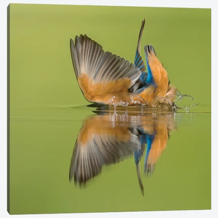 Kingfisher Looking For Fish Canvas Print #PSM49} by Pascal De Munck Canvas Art Print