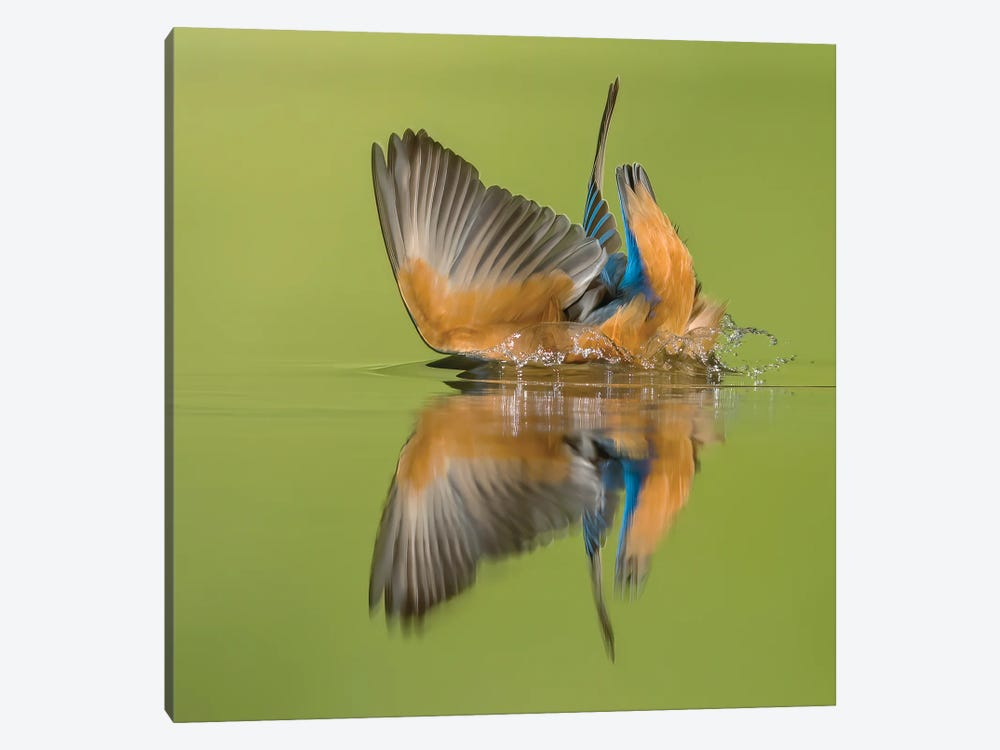 Kingfisher Looking For Fish by Pascal De Munck 1-piece Canvas Wall Art
