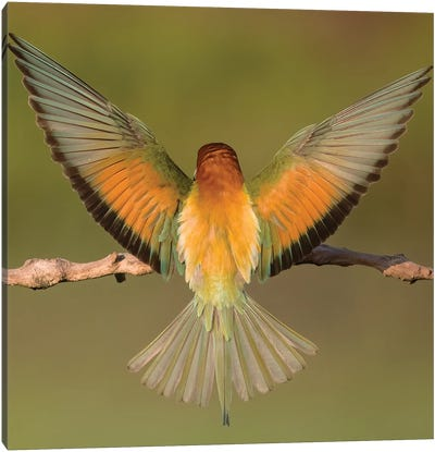 Beeeater Colorful Back Canvas Art Print