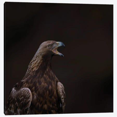 Golden Eagle The Scream Canvas Print #PSM78} by Pascal De Munck Canvas Art
