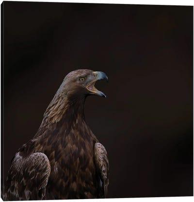 Golden Eagle The Scream Canvas Art Print