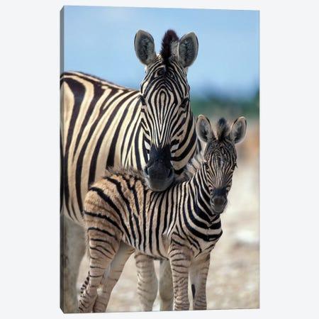 Zebra Herd Gathers On Salt Pan Near Water Hole, Namibia, Etosha National Park, Canvas Print #PSO16} by Paul Souders Canvas Art Print