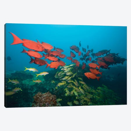 Shoals, Manta Reef, Praia de Jangamo, Mozambique Canvas Print #PSO1} by Paul Souders Canvas Art