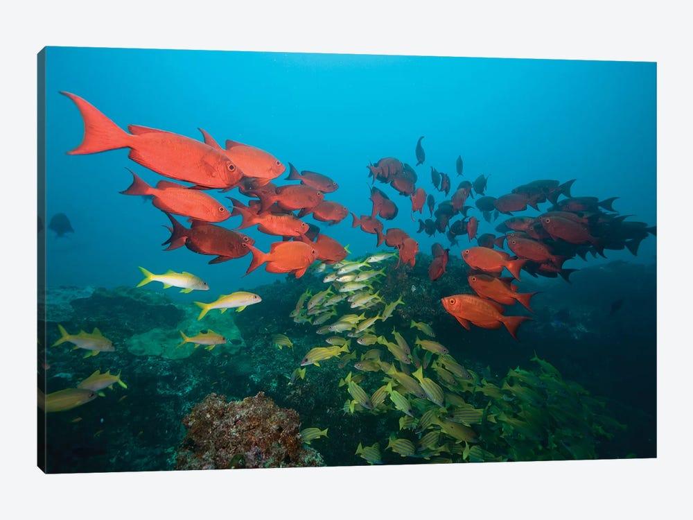 Shoals, Manta Reef, Praia de Jangamo, Mozambique by Paul Souders 1-piece Canvas Art
