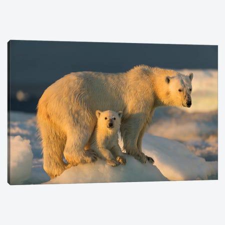 Polar Bear Cub Beneath Mother While Standing On Sea Ice Near Harbor Islands, Canada, Nunavut Territory, Repulse Bay. Canvas Print #PSO22} by Paul Souders Canvas Art Print